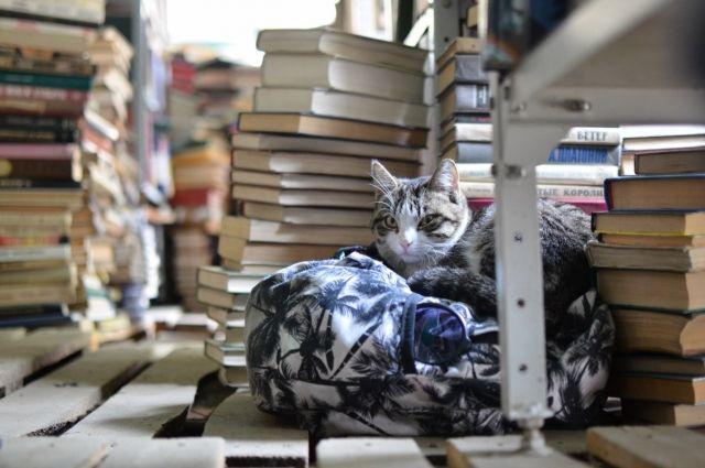 В книжном приюте можно найти любую литературу.