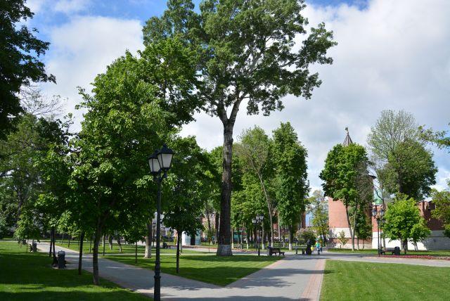 В новом сквере  может посадить дерево любой желающий и тем самым  внести вклад в создание новой зеленой территории города.