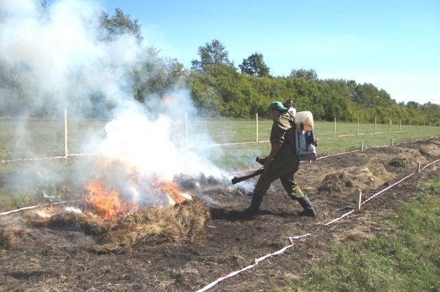 Лучшим лесным пожарным стал спасатель из Ноябрьска.