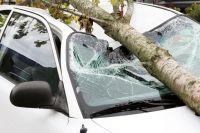 Все чаще в городе падают старые деревья.