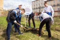 Территорию березниковского Лицея №1 теперь украшает аллея из 25 молодых саженцев рябины, березы и ели.