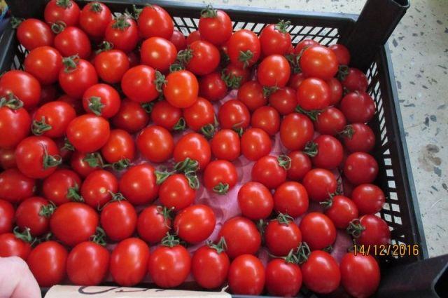 Россельхознадзор Тверской области пресек ввоз польских томатов