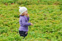 Ягодные поля фермера расположены в Зеленодольском районе.
