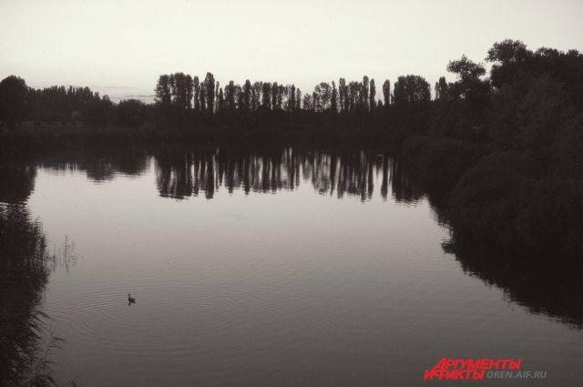 В Бузулукском районе в пруду Центральный найдено тело мужчины