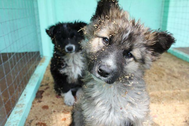 В интернете появились фото массовой гибели животных в Ноябрьске.