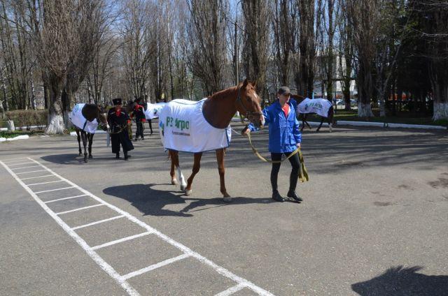 НаСтаврополье конь завёл страничку в«ВКонтакте»