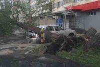 В плохую погоду нельзя оставлять свои авто вблизи деревьев.