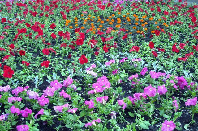 Тюменские студенты проходят «цветочную» практику