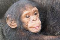 Маленькие обезьянки уже освоились.
