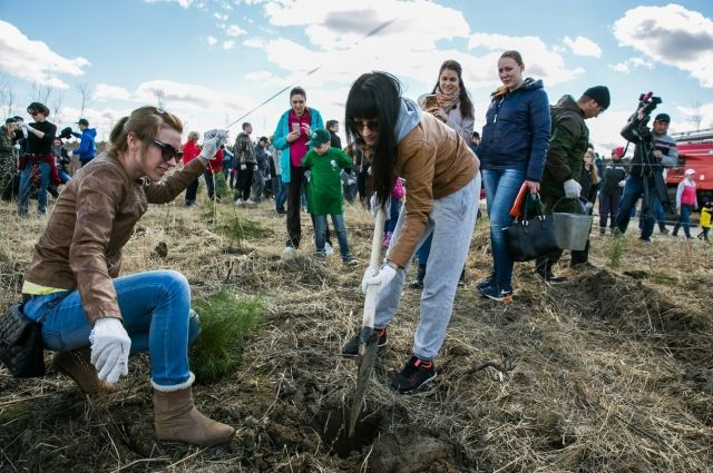У протоки Байбалак засадили 5 га земли саженцами кедров и лиственницы
