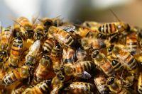 В Тюмени папу и дочку искусали соседские пчёлы