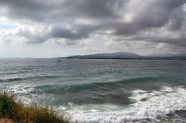 На берег впоселке Гизель-Дере вызвали скорую для дельфиненка