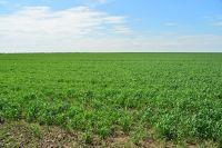 Капризы погоды могут дорого обойтись земледельцам.