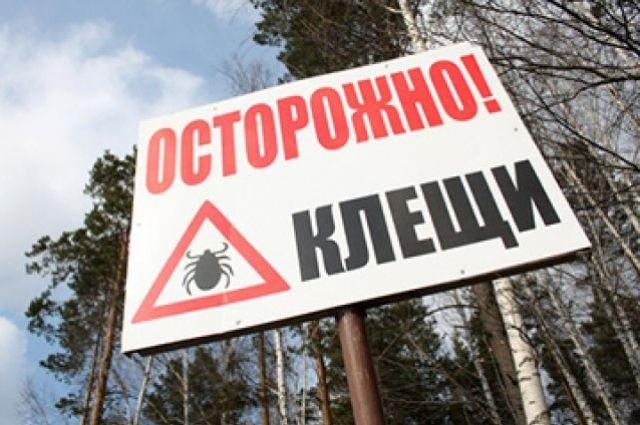 Ссамого начала сезона вПрикамье отукусов клещей пострадали шесть тыс. человек