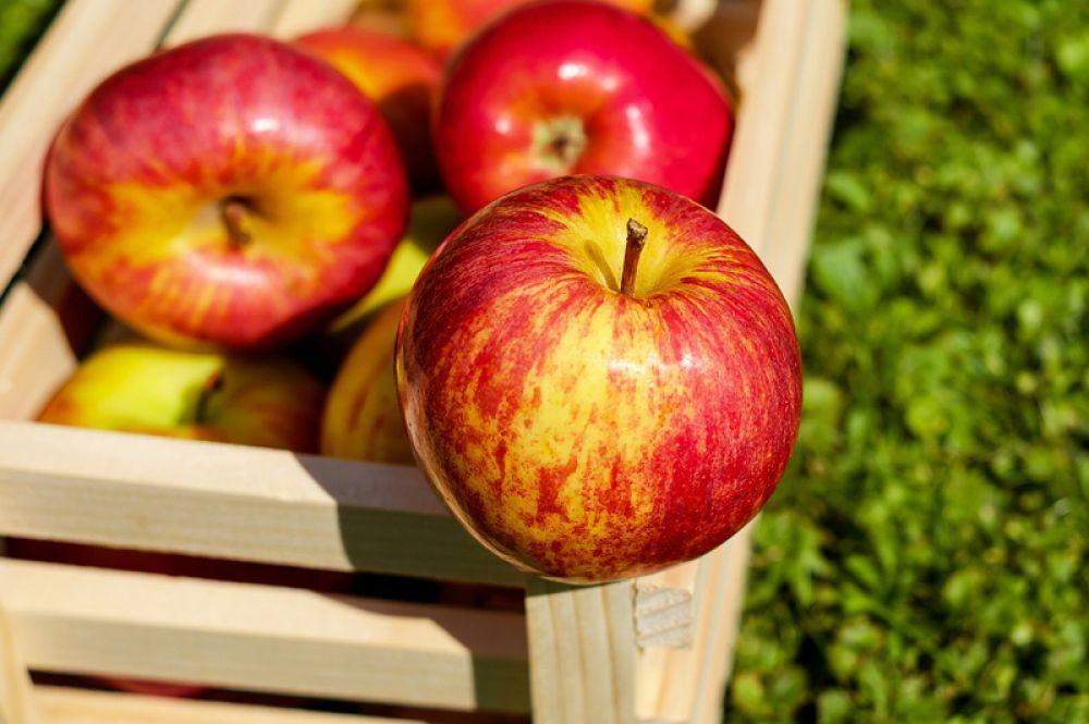 Яблоки. Очиститель крови, они полезны для лимфатической системы, без которой не будет нормального кроветворения. В яблоках есть вещества, которые помогают усваивать железо.