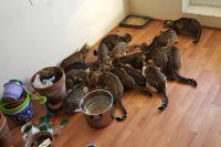 Женщина приютила два десятка кошек.