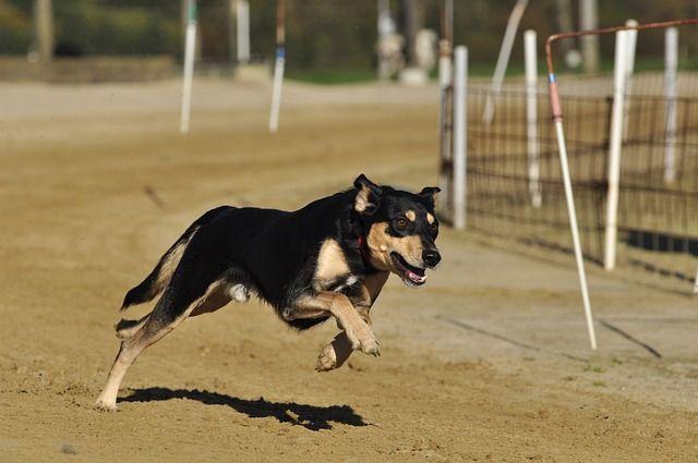 ВУфе появится еще одна площадка для выгула собак