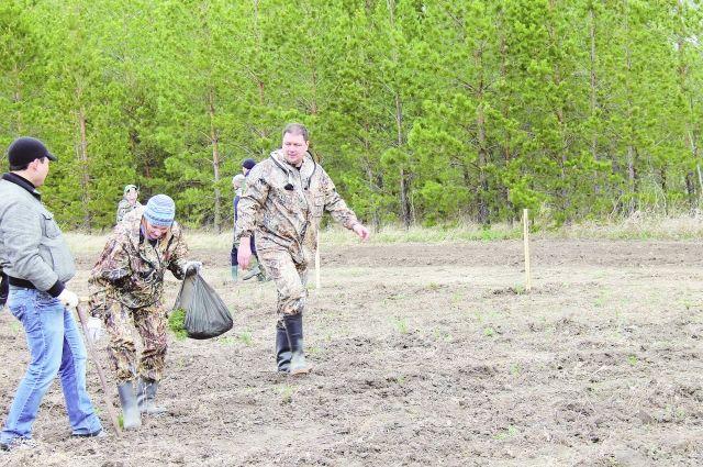 Леса Омской области - одно из ключевых богатств региона.