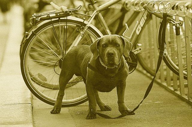 Не оставляйте велосипед без присмотра.