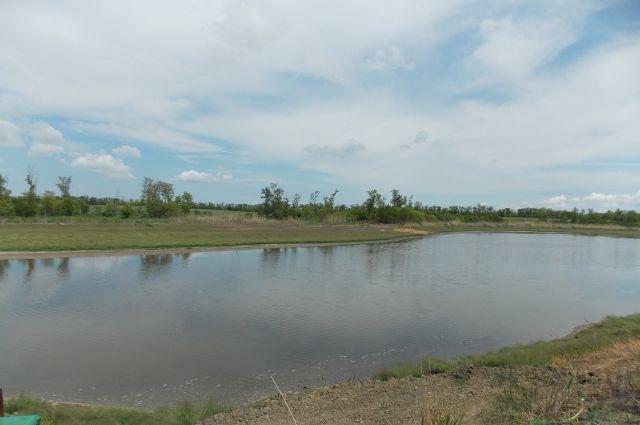 Бывшие заброшенные пруды вычистили и привели в порядок. Теперь здесь не страшно выращивать рыбу.