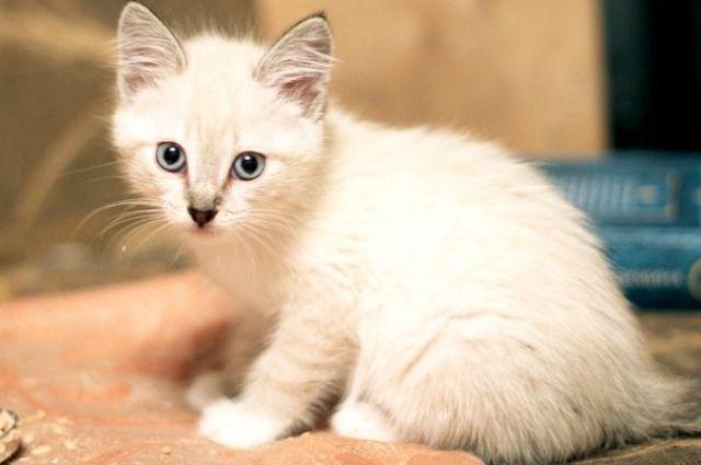 ВЛуцке живодеру дали 5 лет заиздевательства над котятами