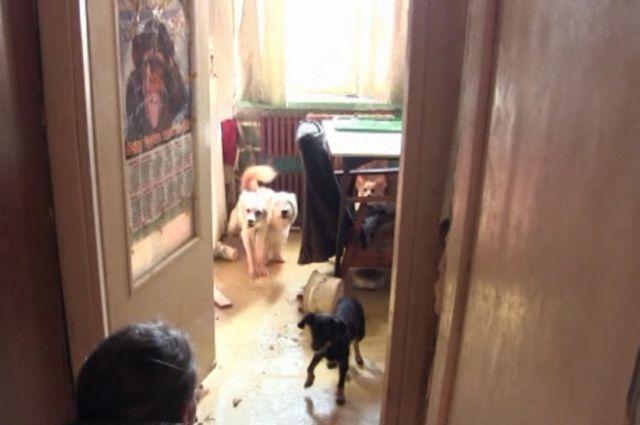 Владельца 14 собак выселили изквартиры вБрянске