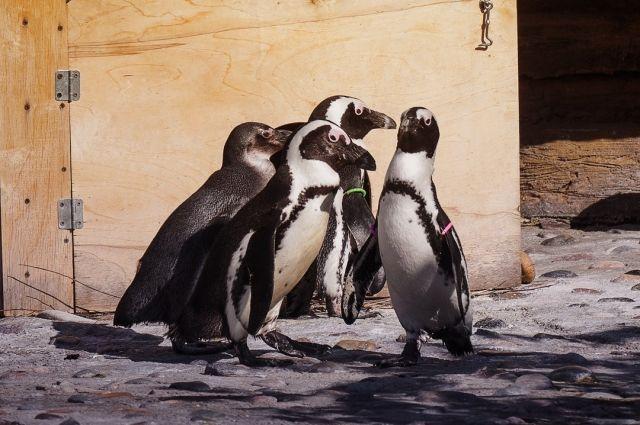 Все пингвины охотно общаются друг с другом.