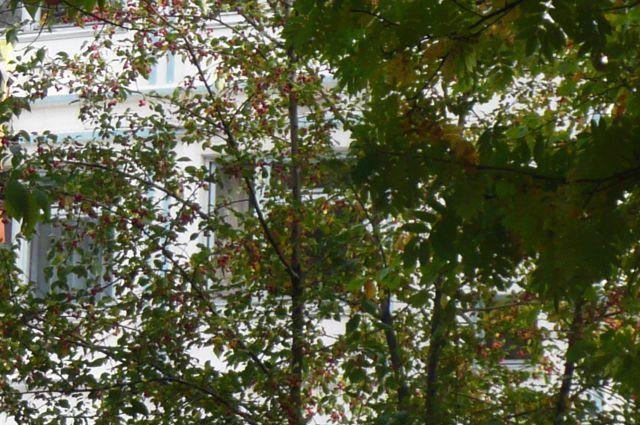 В «Парке Победы» Салехарда высадили более сотни саженцев рябины