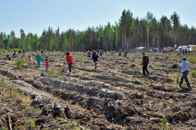 На Ямале во Всероссийский день посадки леса высадили 1,1 тысячу деревьев