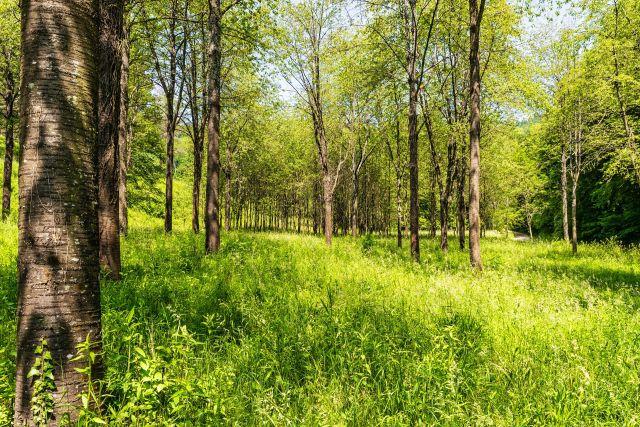 Пенсионерка могла потеряться в лесу.