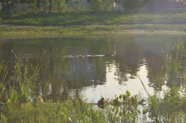 Пока вода в озере на Радиостанции №2 нравится только уточкам