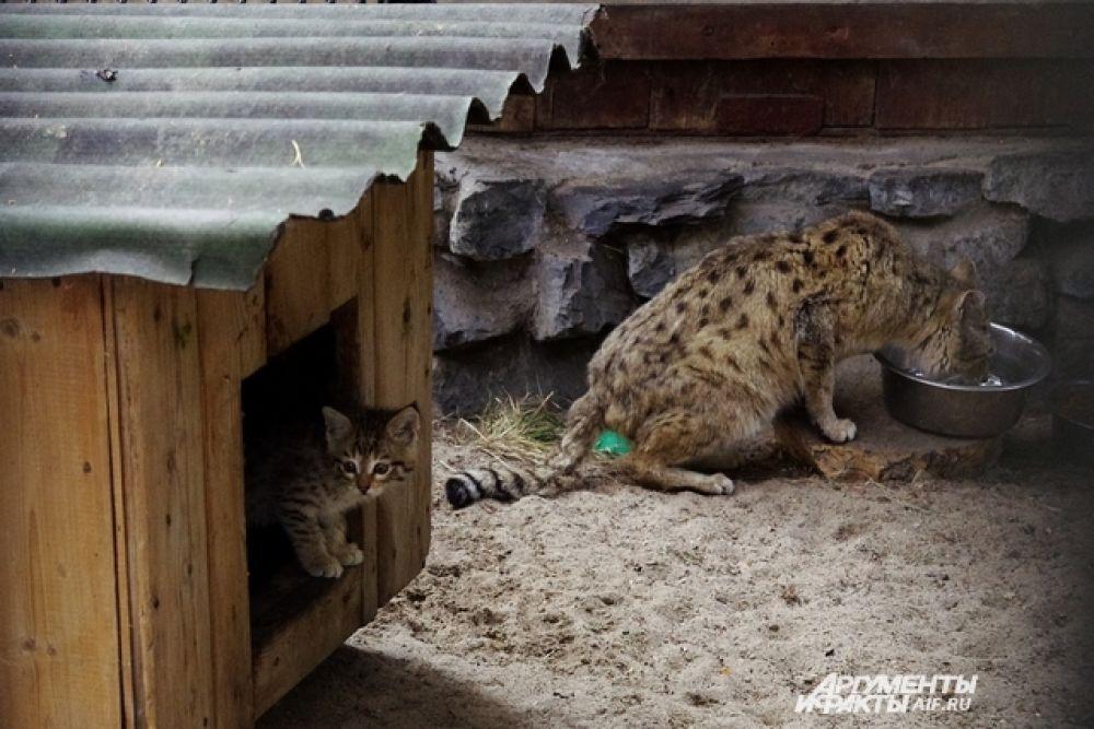 Из-за жары ужин хищникам перенесли на более позднее время и следят, чтобы еда не оставалась в мисках - может испортиться