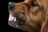 Бродячий пёс напал на 14-летнюю девочку