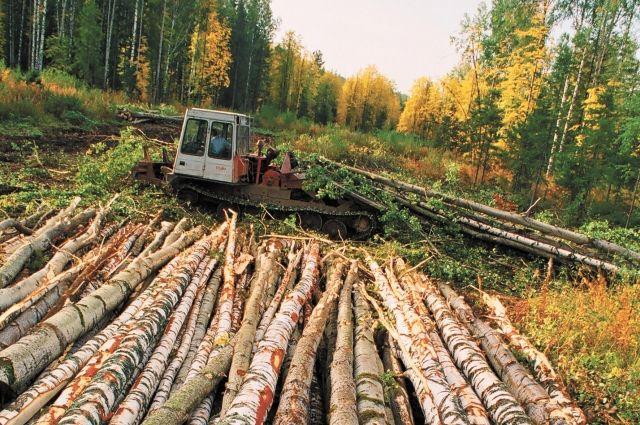 Затраты на заготовку и вывоз древесины за 5 лет увеличились в несколько раз.