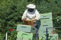 На ярмарках сложно отличить качественный мёд от фальсификата, поэтому лучше покупать его напрямую у пчеловодов.