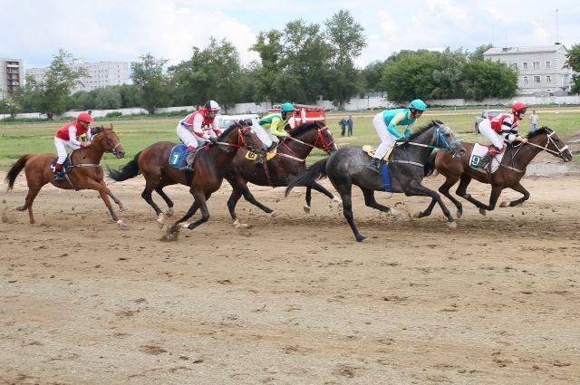 Скачки — вид испытания лошадей на резвость.
