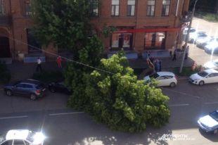 В Оренбурге за Домом Советом на проезжую часть рухнуло дерево