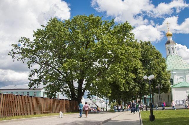 Дуб города Владимира получил статус монумента живой природы