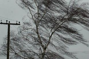 От штормового ветра деревья повалило и раскидало на 20 километров.