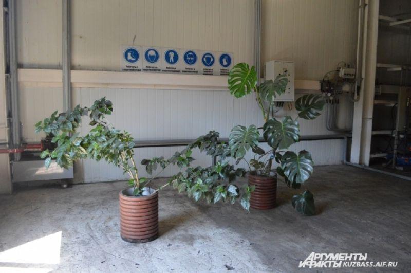 На сооружениях довольно много цветов и растений. Видимо, чтобы поглощали вредные газы.