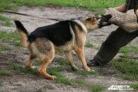 Агрессивную собаку перевоспитать трудно.