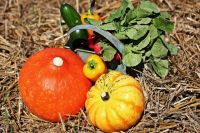Овощи прорастают прямо из соломы. Грядки не нужно пропалывать и поливать.