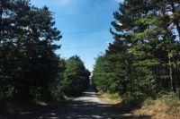 Лес вблизи Симферополя.