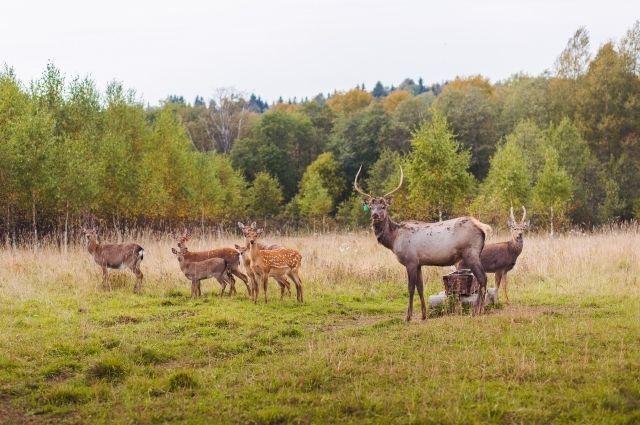 Охота в Тверской области на Волге