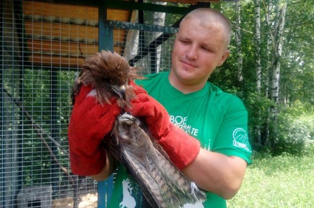 В «Кузнецком Алатау» спасли коршуна, которого нашли туристы во время сплава.