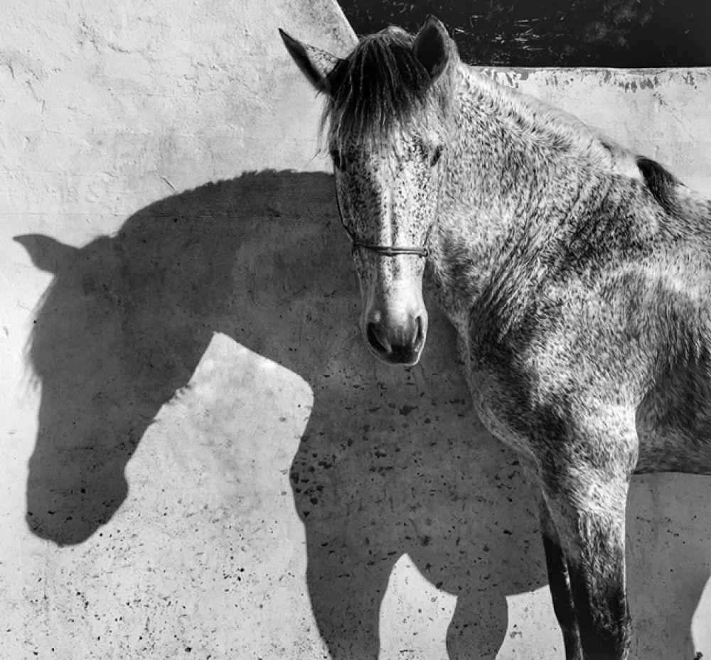 1 место в категории «Животные» — Лошадь в конюшне, Андалузия, Испания.