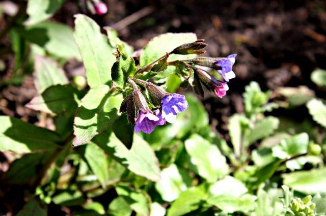 На Ямале, в посёлке Ханымей, высадят более 10 тысяч цветов