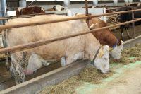 Валовой надой молока в сутки по республике превышает прошлогодний показатель более чем на 55 тонн.