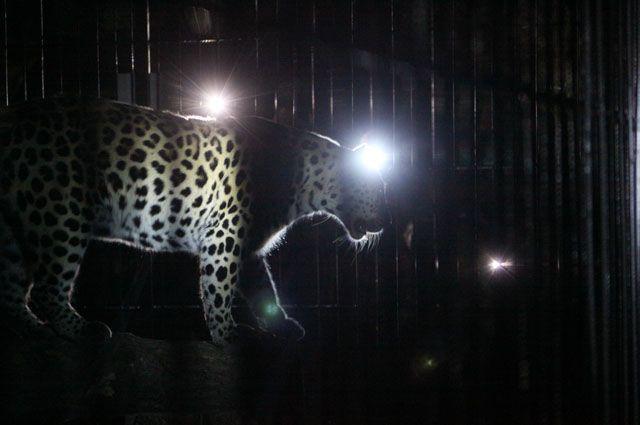 В барнаульском зоопарке 30 июня проведут ночную экскурсию.