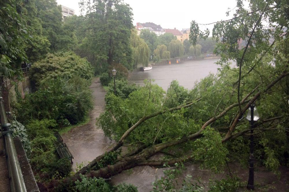 Поваленные деревья у реки Шпрее.